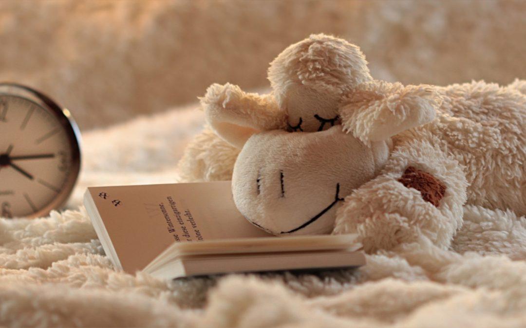 Oveja leyendo antes de dormir