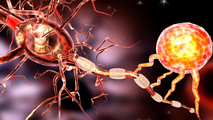 ACBP la proteína que adelgaza