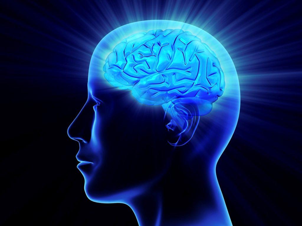 El cerebro Egoísta y glotón