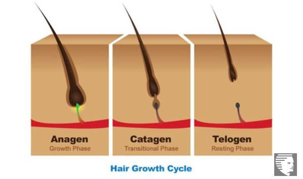 Ciclo de crecimiento