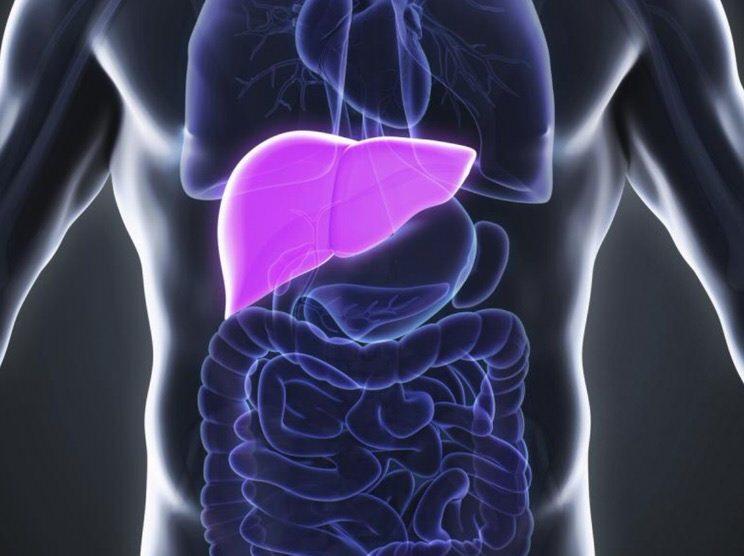disposición hígado