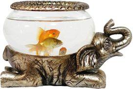La pecera de oro y los mitos sobre el pescado